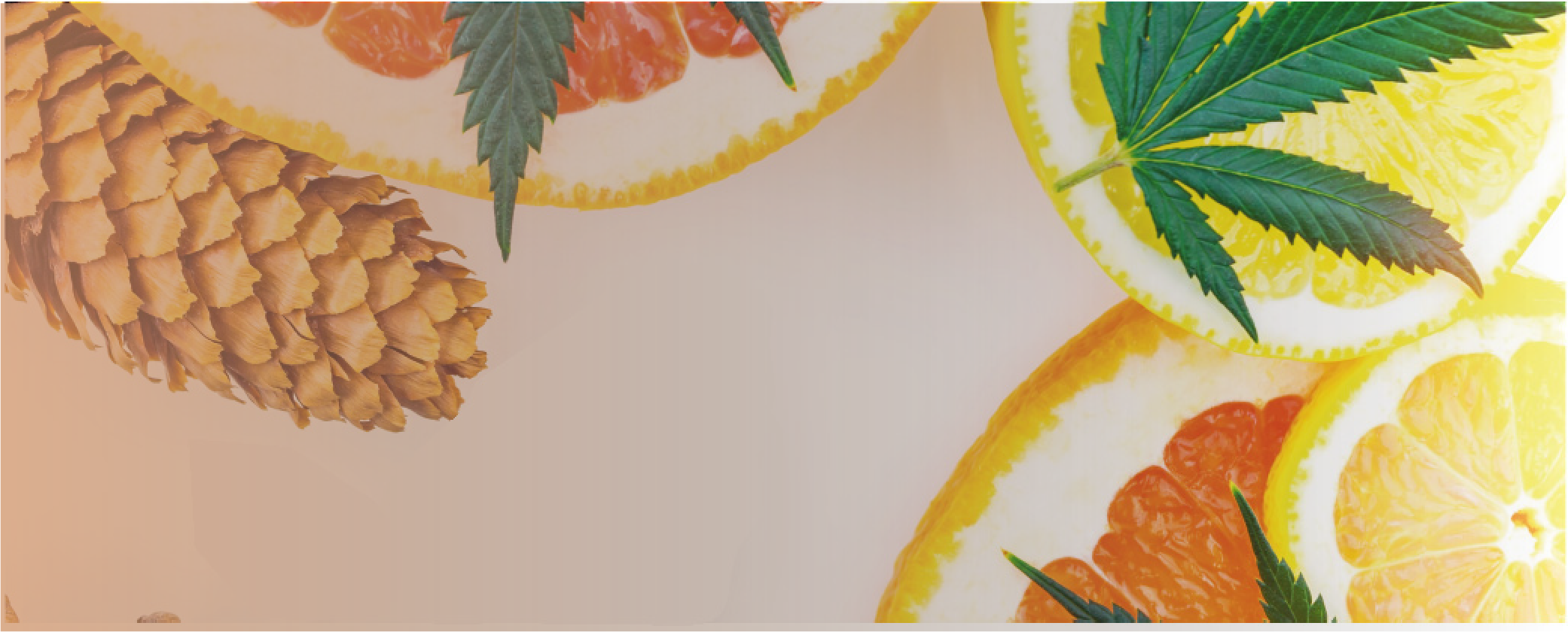 What are Terpenes and flavonoids? Here's our ultimate guide!